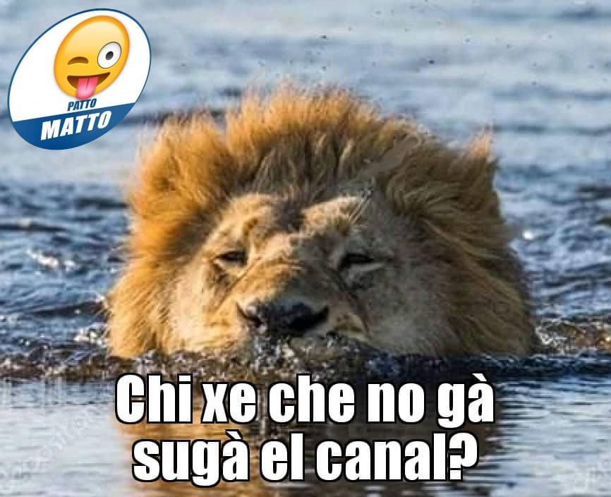 patto-matto-leone.jpg